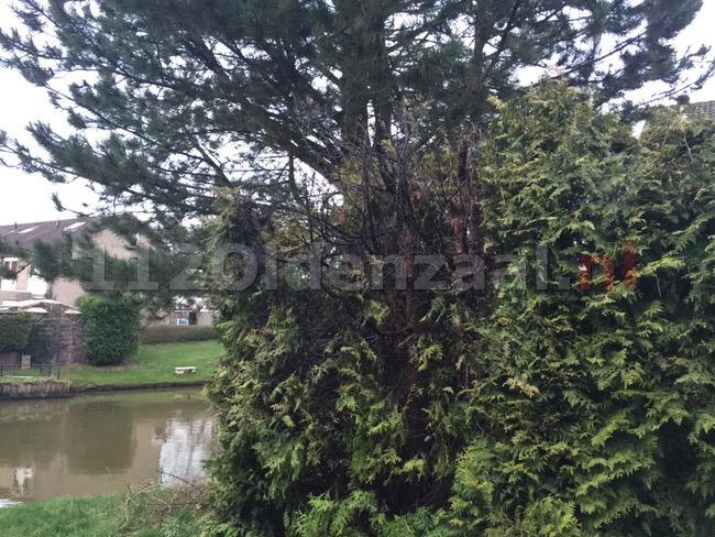 Foto: Coniferen in brand Zandhorstlaan Oldenzaal