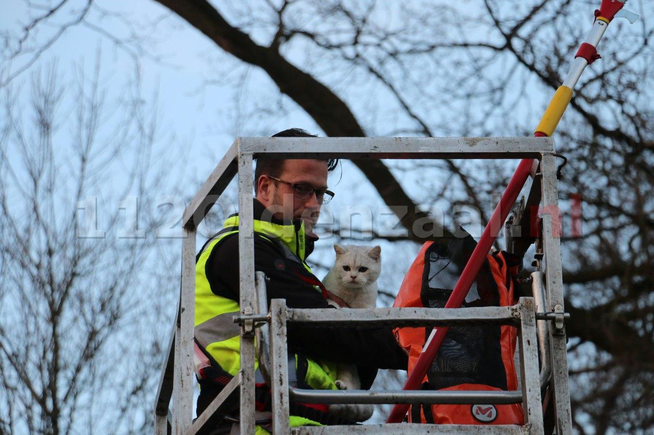 Update: Reddingsactie voor kat in boom Oldenzaal succesvol afgerond