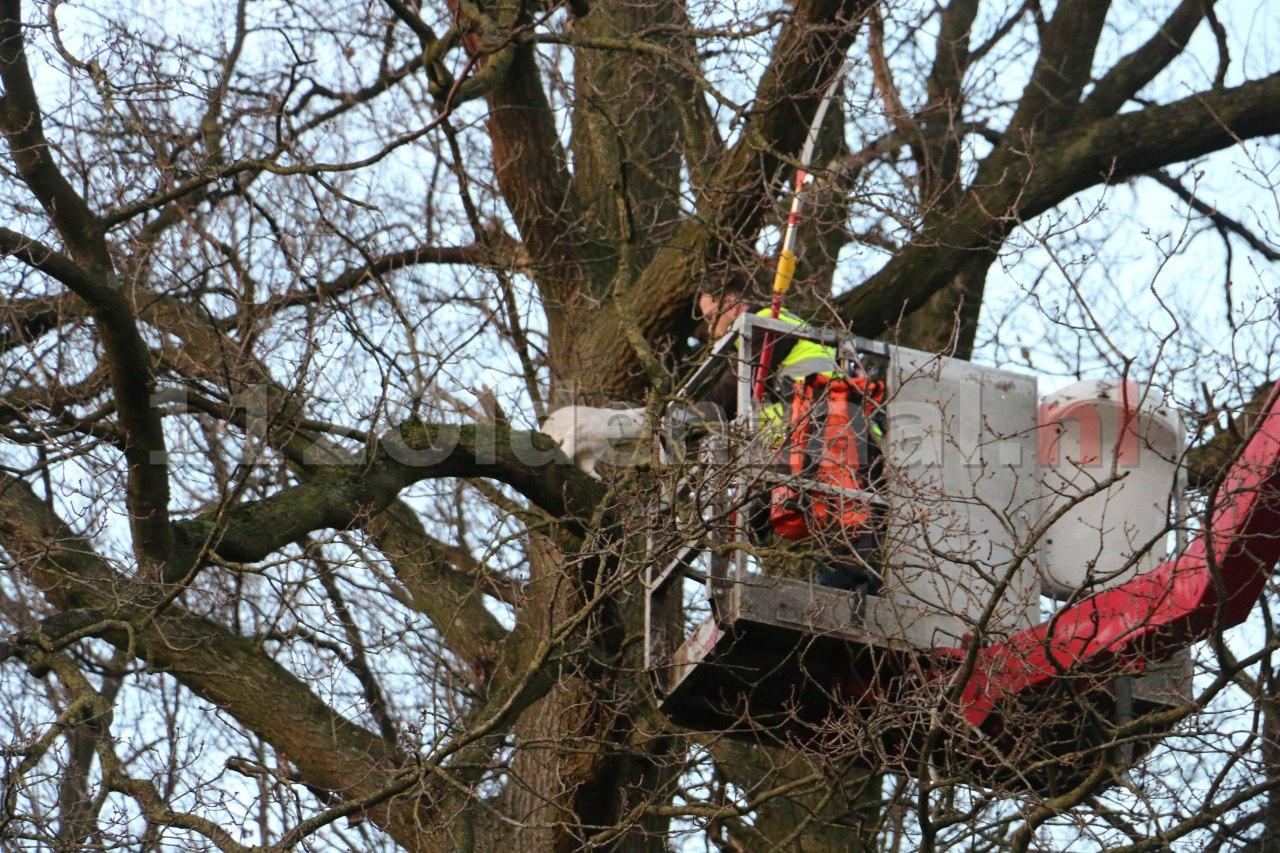 Video: Reddingsactie voor kat in boom Oldenzaal succesvol afgerond