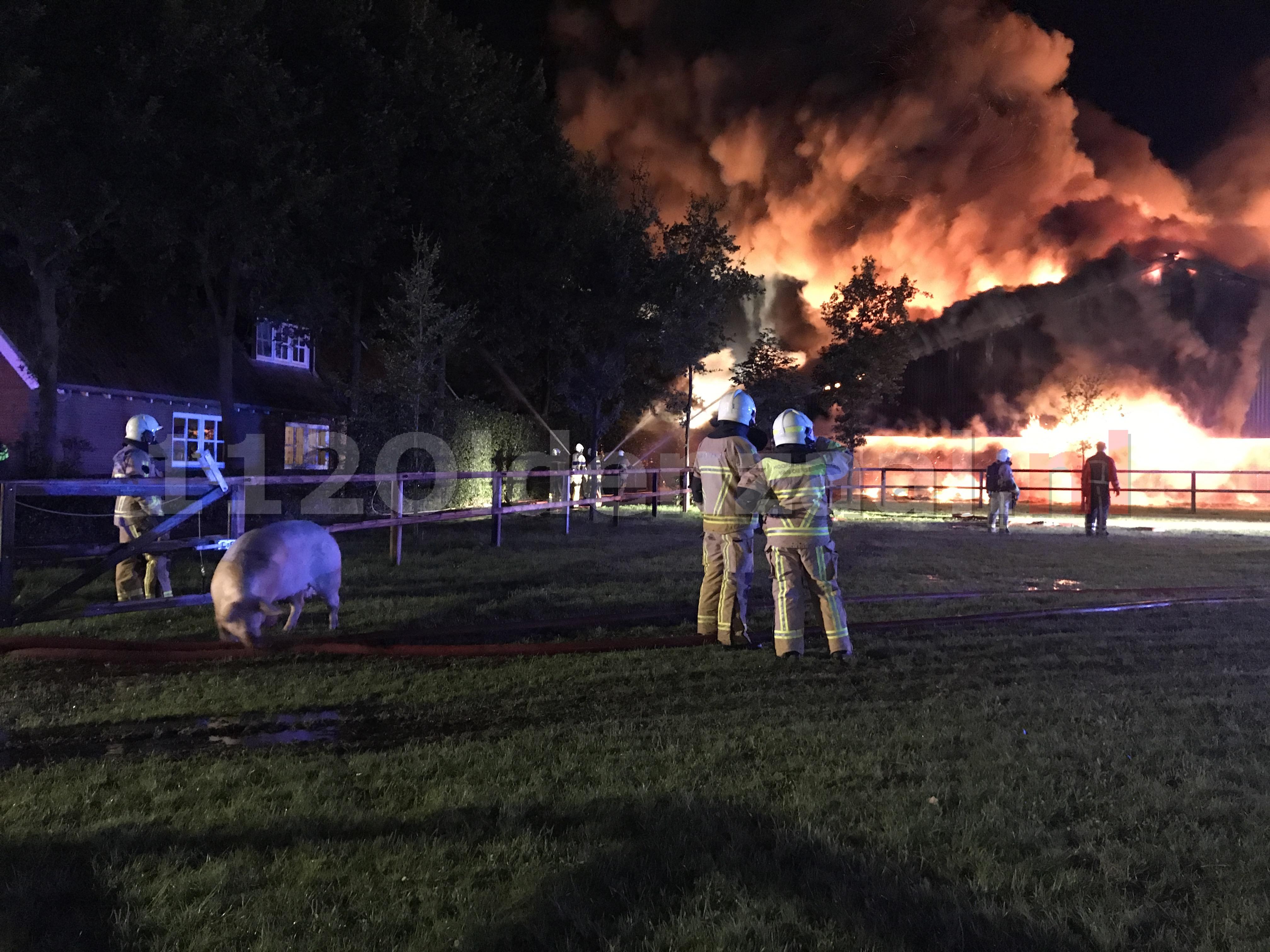 Foto 3: Biggen en varkens omgekomen bij zeer grote brand in twee varkensstallen in Agelo