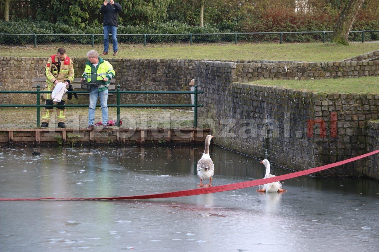 UPDATE (video): Brandweer en dierenambulance redden gans van ijs in Oldenzaal