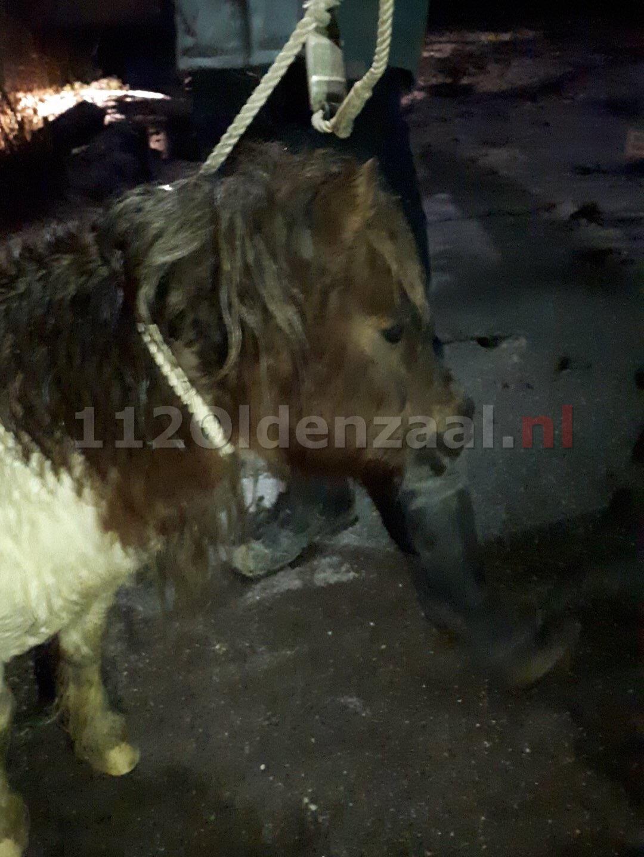 Pony aangetroffen op Bentheimerstraat; politie zoekt eigenaar