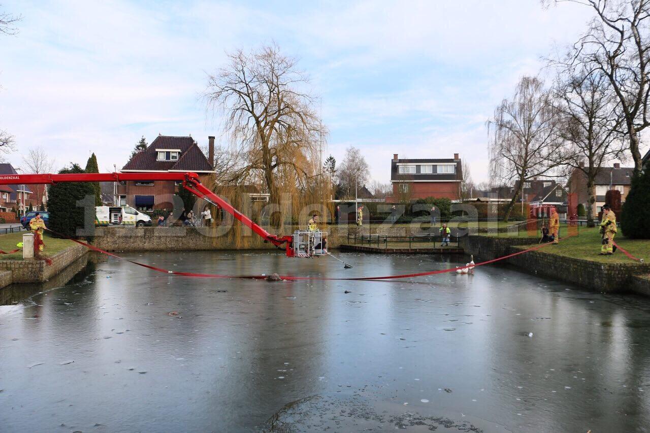 Gans vast op ijs in Oldenzaal