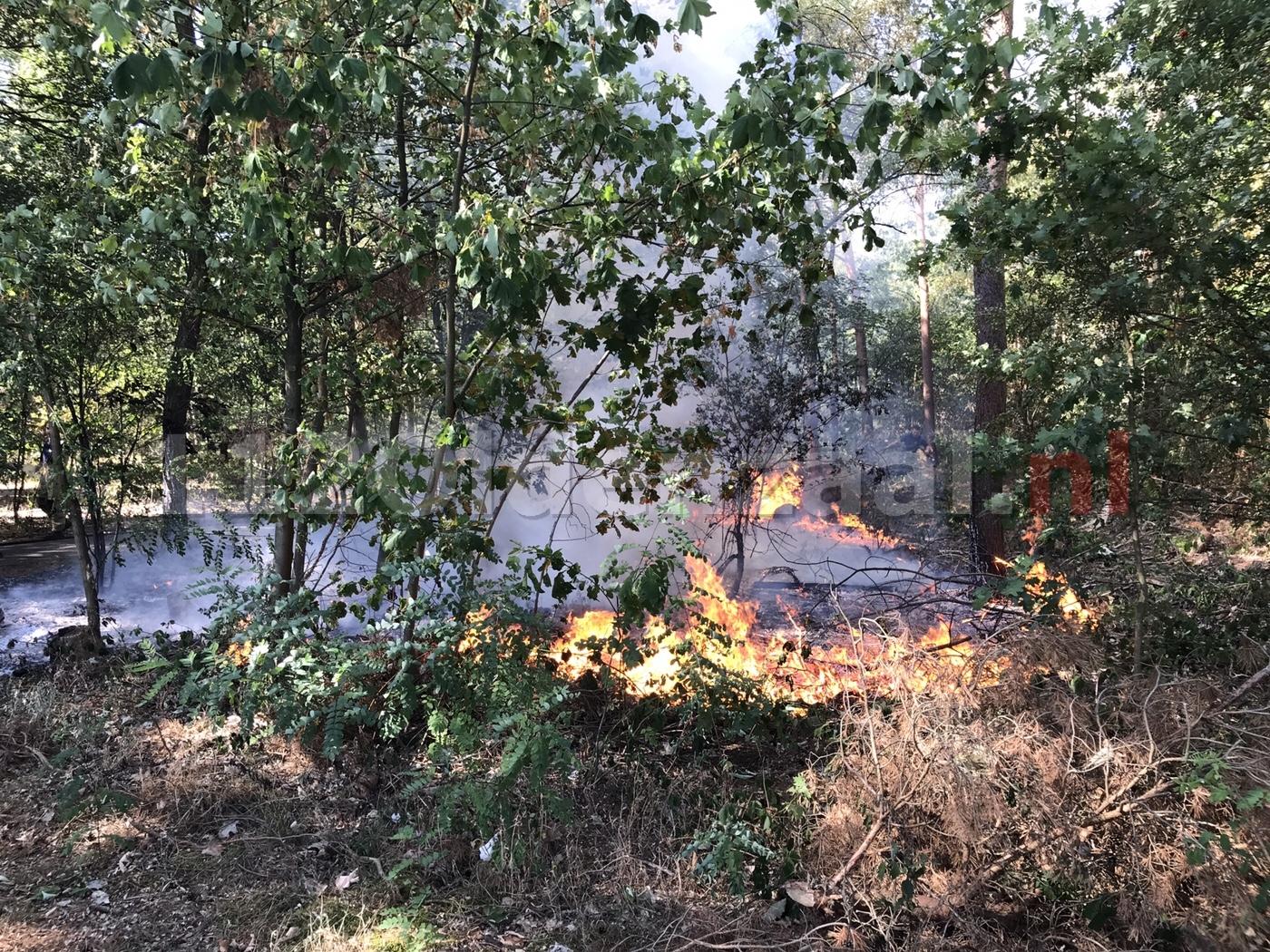 Twee branden in bos bij Het Hulsbeek in Oldenzaal