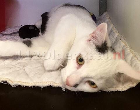 Katten aangetroffen in dichtgeplakte doos in Oldenzaal