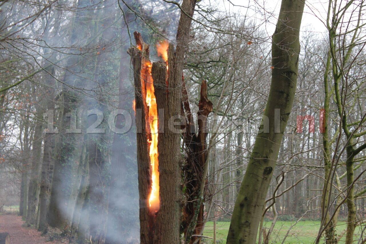 Boom in brand Haerstraat Oldenzaal