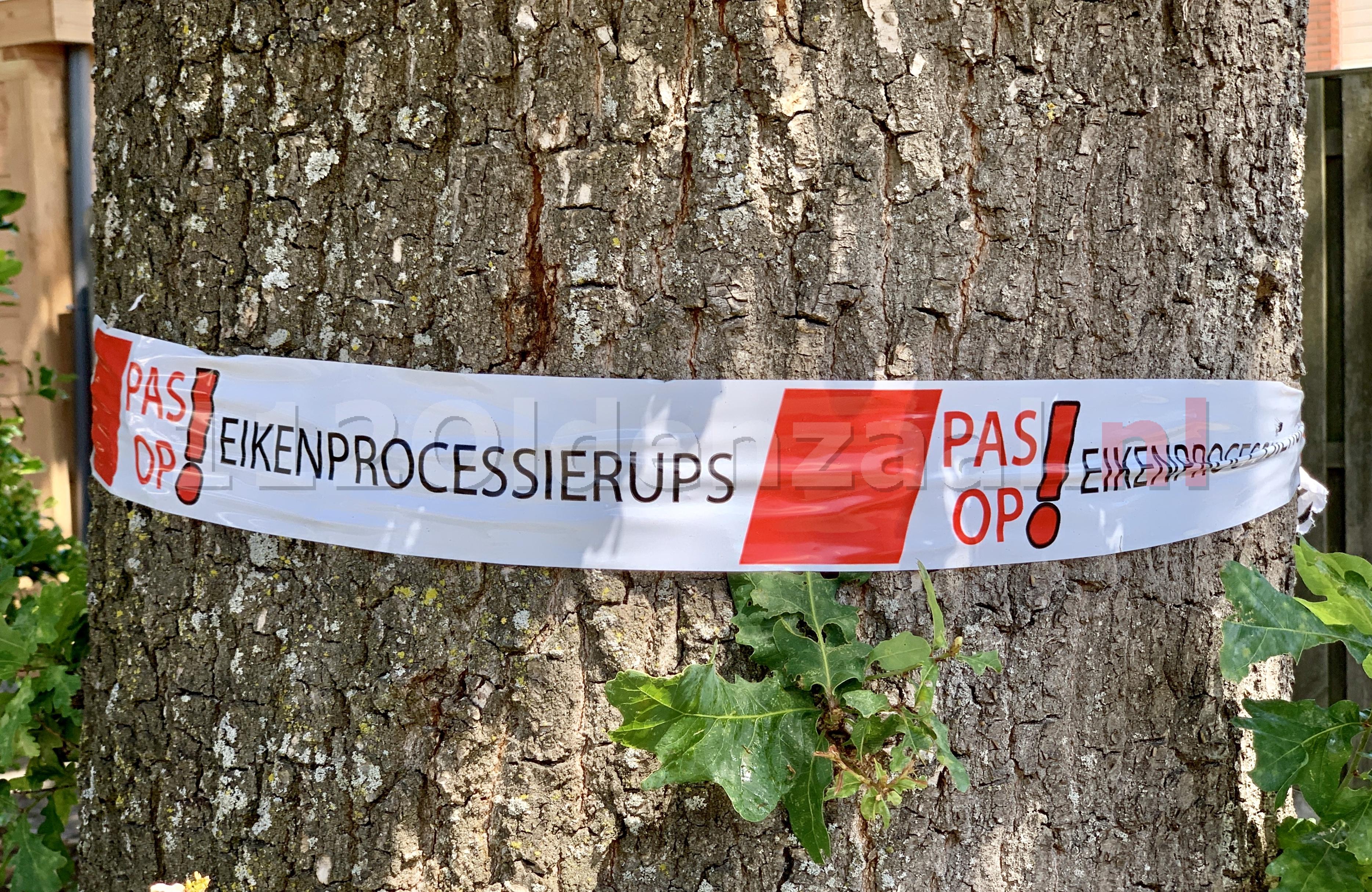 Inzet van extra capaciteit voor verwijderen eikenprocessierups in Oldenzaal