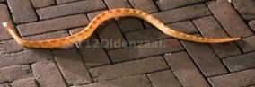 Ongevaarlijke slang gesignaleerd in Oldenzaal