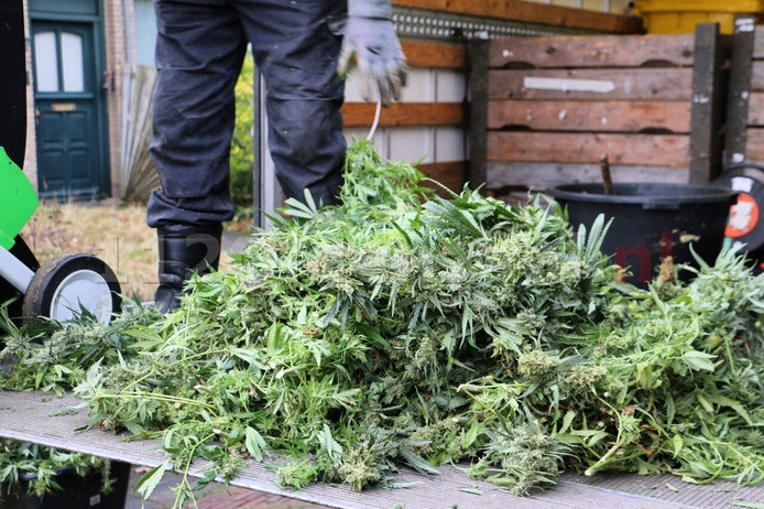 Gezamenlijke aanpak illegale hennepteelt Noordoost Twente